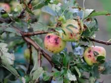 Hagelbui Wijk bij Duurstede: schade aan fruit meer dan een ton, deuken in auto's