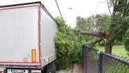 Boom breekt af en belandt op elektriciteitskabel en vrachtwagen