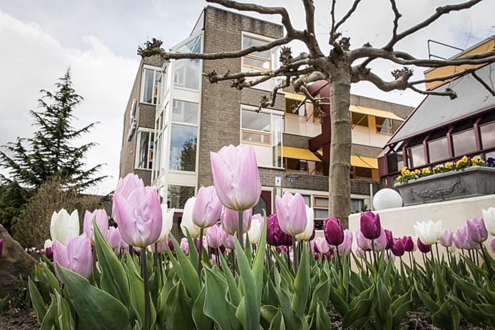 Tulpen bij Cederhof in Kapelle.