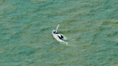 """Verdwaalde bultrug ontsnapt aan krokodillen: """"Allerbeste resultaat waarop we konden hopen"""""""