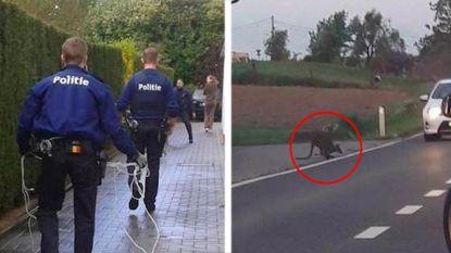 """""""Agenten horen geen uren achter dieren aan te zitten"""""""