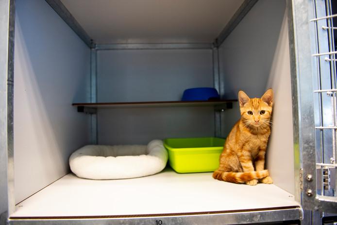 Een kitten bij dierenasiel De Kuipershoek wacht om te worden opgehaald door zijn nieuwe baasje.