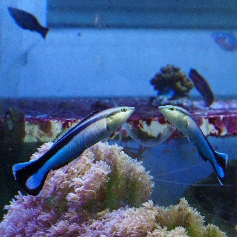 Een poetsvisje voor een spiegel Beeld