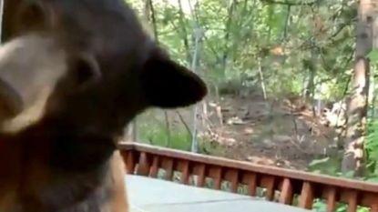 """VIDEO. Beer probeert huis tevergeefs via deur binnen te dringen, maar dan merkt hij open raam op: """"Help!"""""""