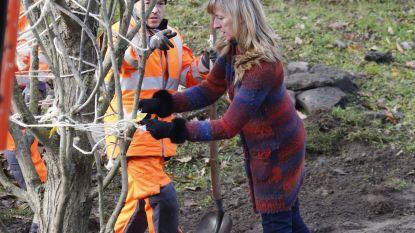Kinderen hebben eigen boom om in te klimmen in Destelbergen