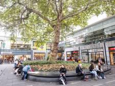 Rotterdamse boom delft het onderspit: de Heksenboom in Bladel is de mooiste van het land