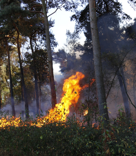 Deel van bos brandt uit in Boxmeer