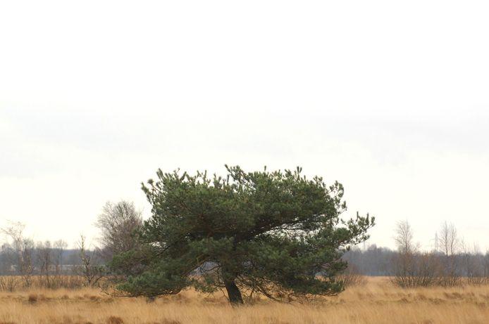 Zoals het er naar uitziet, blijft het Wierdense Veld een natuurgebied met een beschermende Natura 2000-status.