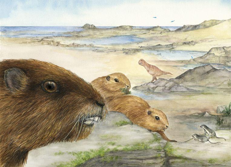 De vintana sertichi, een groot knaagdier, wandelde tussen de dinosauriërs door blijkt uit een onderzoek gepubliceerd in Nature. Beeld Nature