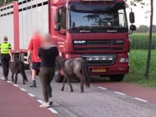 Politie neemt 17 verwaarloosde dieren in Aalten in beslag: 'We kennen het adres'