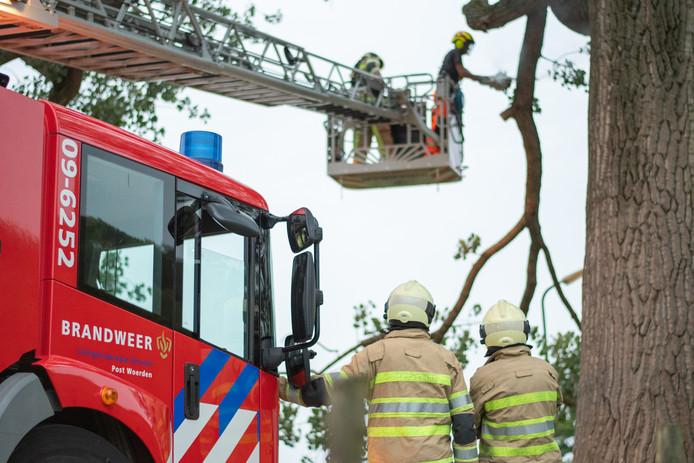 De brandweer zaagt de tak af