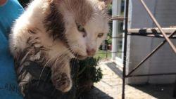 Kat gered die drie dagen klem zat in afvalcontainer