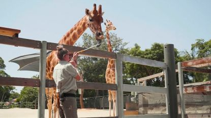 VIDEO. Zo zoeken dieren in Australische zoo afkoeling