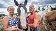 Westrozebeeks cowboykoppel verhuist met ranch naar Antwerpen
