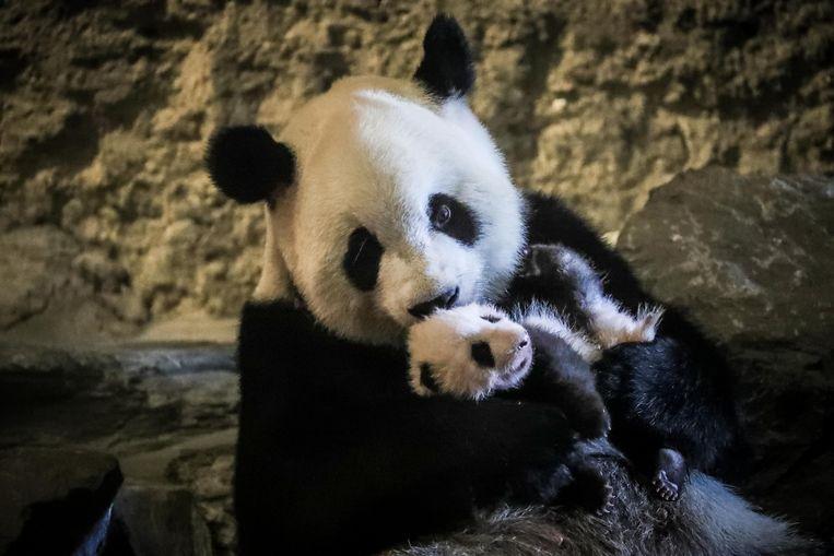 Panada Hao Hao met haar baby Tian Bao.