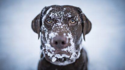 Sneeuw in de Ardennen, elders droog