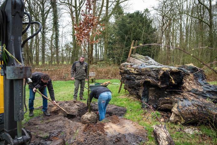 Dinsdagochtend is een nieuwe Mariaboom in Kloosterbos geplant. De oude Mariaboom, met doorsnede van bijna twee meter, ligt als rottende stronk er naast