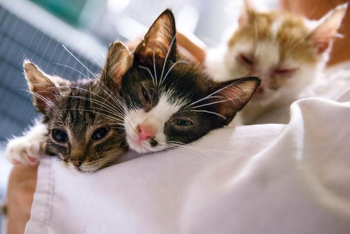 Deze jonge katjes hebben een goed onderkomen. Dierenartsenpraktijk Amstel Vecht en Venen, de politie en Dierenambulance De Ronde Venen/Amstelland waarschuwen nu voor rattengif in Wilnis.