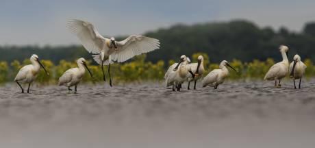 Dit vogelparadijs wil Waddenzee en IJsselmeer overtroeven: 'Markiezaat is een magneet voor vogels'