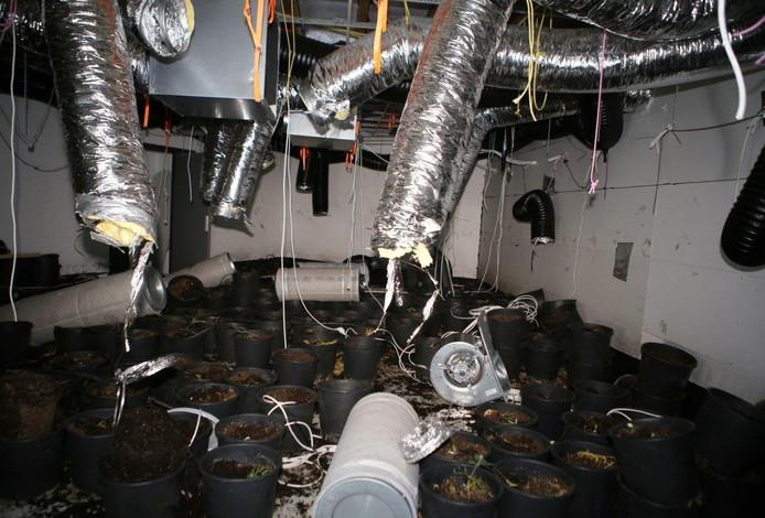 Volgens de politie stonden er in dit drugslab in Heeswijk naar schatting zo'n 1.500 planten.