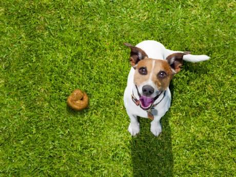 Drugspoep eten wordt hondje bij Brielse Meer bijna fataal