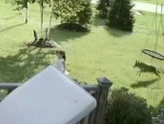 Meisje van 5 ontsnapt nipt in haar tuin aan aanstormende coyote