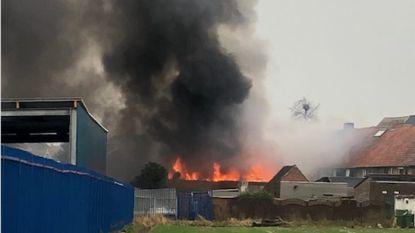 Uitslaande brand vernielt woning op Brusselsesteenweg: kat komt om in vuurzee