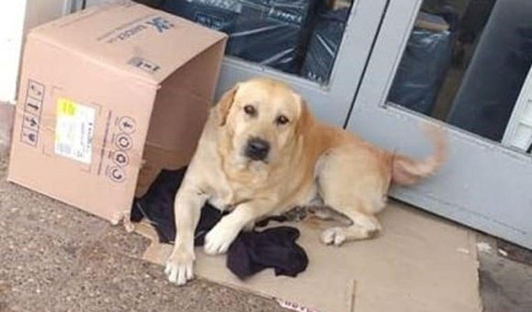 Hond Toto weigert zijn plek voor het ziekenhuis te verlaten.