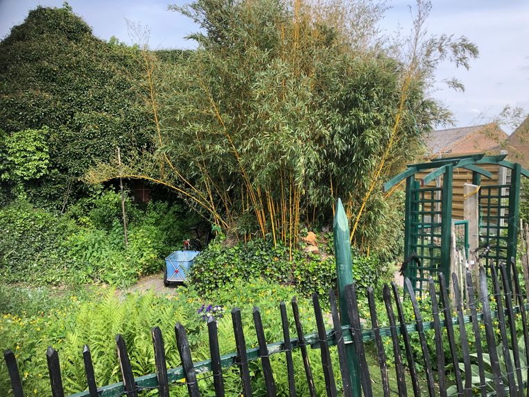 De tuin van het slachtoffer was helemaal verwilderd, tot groot ongenoegen van de dader.