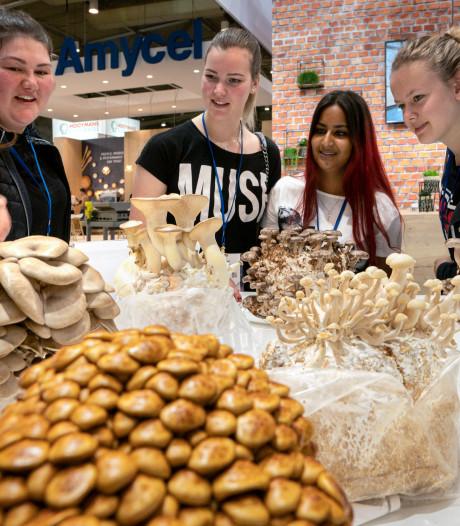 Champignondagen in Brabanthallen: Potentie van paddenstoel moet de jeugd 'high' maken