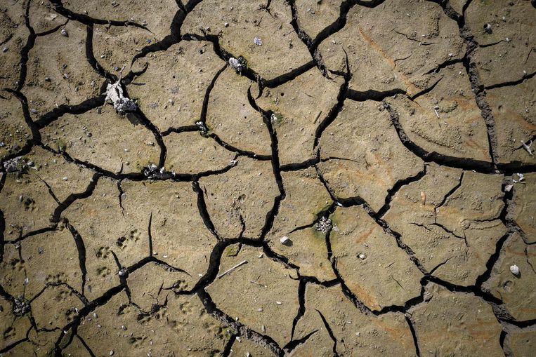 De opwarming van de aarde kan zorgen voor extreem weer, droogtes en overstromingen. Beeld AFP