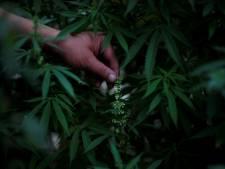 """Zoon (33) die familie omvormde tot cannabiskwekers veroordeeld tot 5 jaar cel, vader slaat mea culpa: """"Ik had strenger moeten zijn"""""""