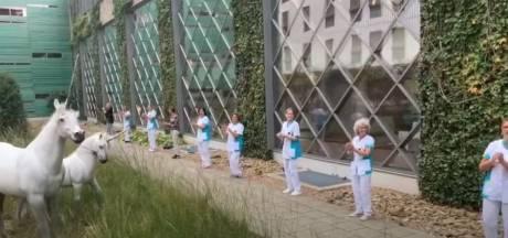Ook personeel ziekenhuis Bernhoven danst mee op #JerusalemaChallenge