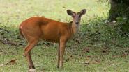 Illegale jacht en vleesbereidingen: twee ambtenaren, onder wie één van Agentschap Natuur en Bos, aangehouden voor corruptie