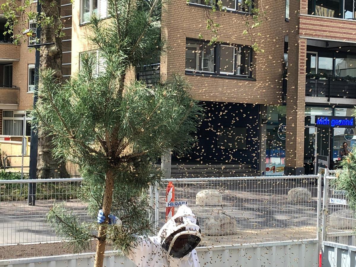 De imker met het bijennest in Eindhoven.