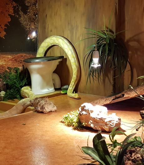 WC-Python kan de pot op in reptielenzoo Iguana