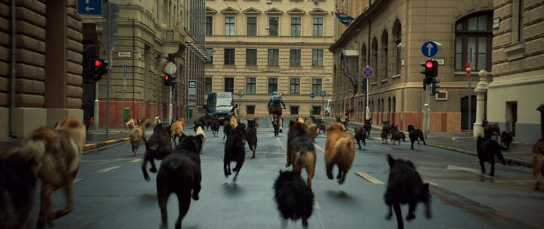 Beeld uit Hongaarse film White God van regisseur Kornél Mundruczó. Beeld Cinemien