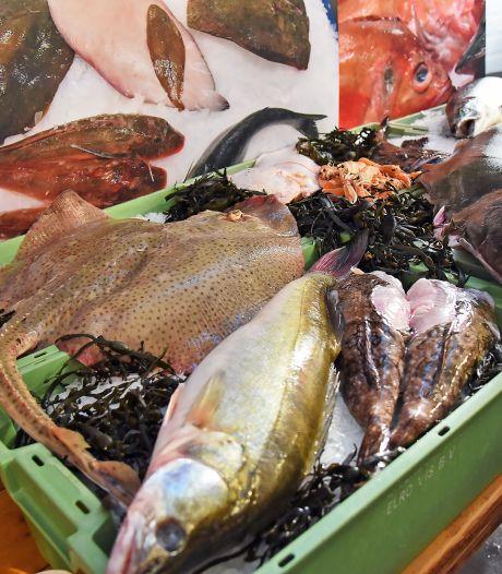 Europarlement wil meer vis in de zee door scherpere maatregelen