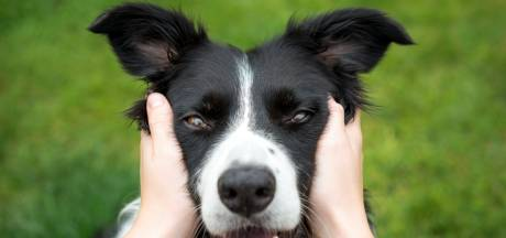 Que faire si votre chien ne peut pas vous accompagner en vacances ?