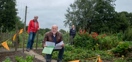 Populierenpluis verpest de aardbeien van tuinders in Zeewolde. 'Ik houd echt van bomen, maar haal deze weg'