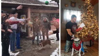 Een week goed nieuws: hond na 500 dagen in dierenasiel eindelijk geadopteerd en andere verhalen die je blij maken