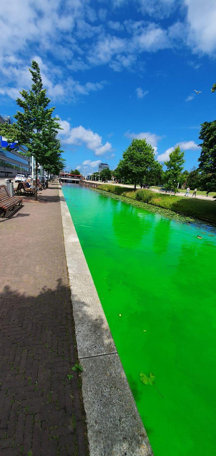 De felgroene kleur van het water in de Haagse grachten.