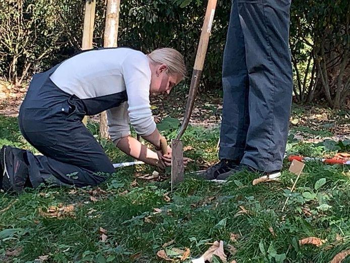 Melissa, leerling van praktijkschool De Brug in Zaltbommel, helpt met het planten van 20.000 bloembollen op de stadswallen van Zaltbommel.