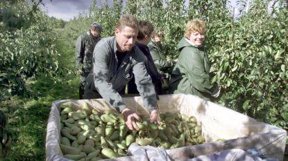 Europese Commissie wil seizoensarbeiders over grens helpen