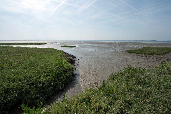 Schor bij Ellewoutsdijk