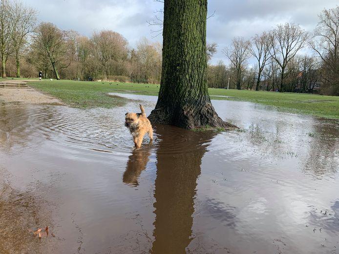 Hond heeft net plasje tegen boom gedaan in het Vondelpark.