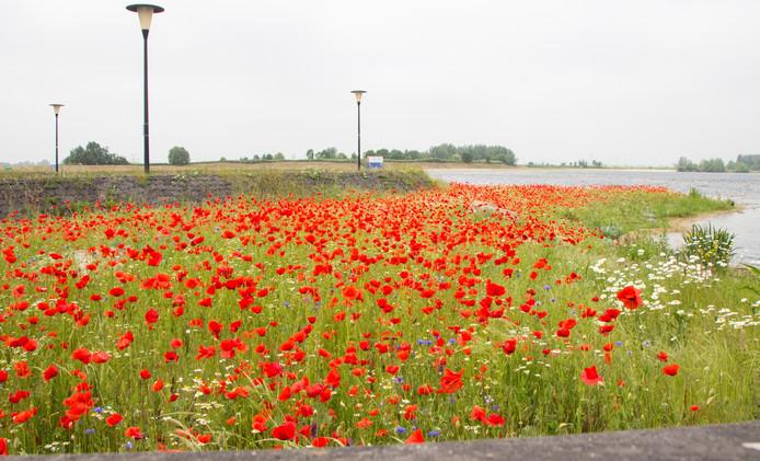 Het resultaat van het weidebloem project dat bewoners uit Stadshagen begonnen.