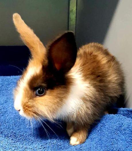 """Un bébé lapin vivant retrouvé avec les pattes attachées dans une poubelle: """"Inhumain!"""""""