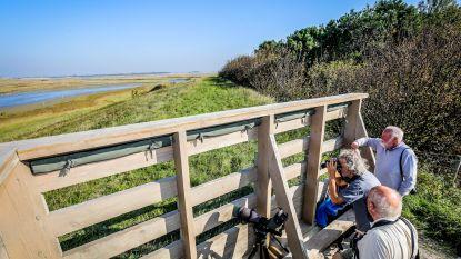 Zwin Natuur Park brengt publicatie 'Wilde rozen in het Zwin en de kustduinen' uit