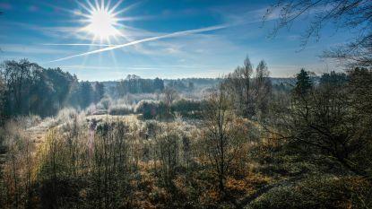 Letterzetter tast bomen in Zoniënwoud aan: tientallen fijnsparren moeten worden gekapt